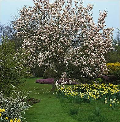 Magnolia's Blessing 1