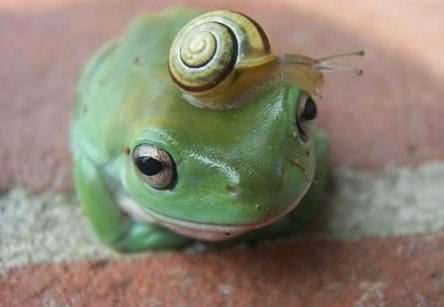 Frog -snail