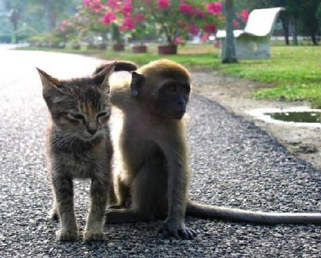 Kitten and monkey