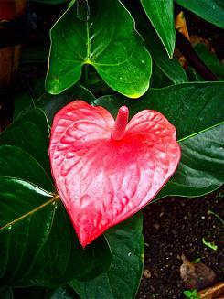 heart flower 12