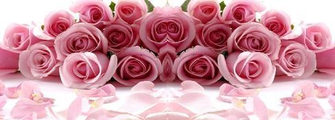 Pink Rose 40