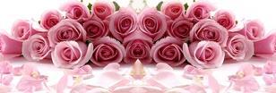 Roses42