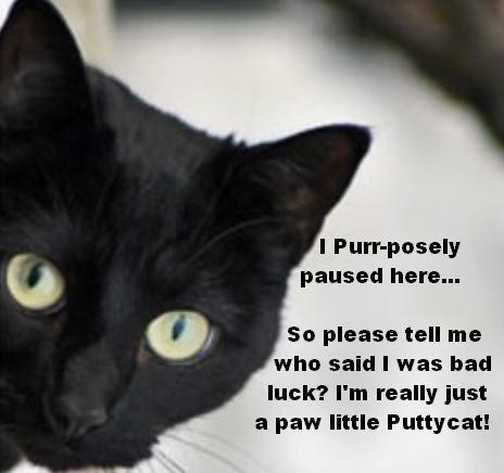 PuttyCat 1