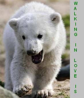 Polar-Bear- 0