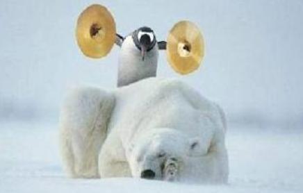 Polar Bear 14