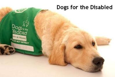 Dogs for the Disabled 1