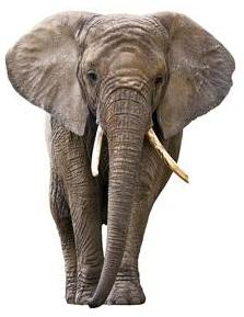 10 Elephant