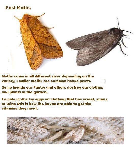 Pest Moths 2