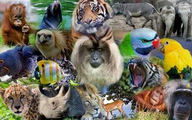 animals-1